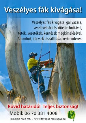 Veszélyes fák kivágása szórólap - Toldi György - Profi favágó alpin technikával
